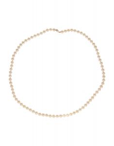 Comete Gold Easy Basic FP013Y